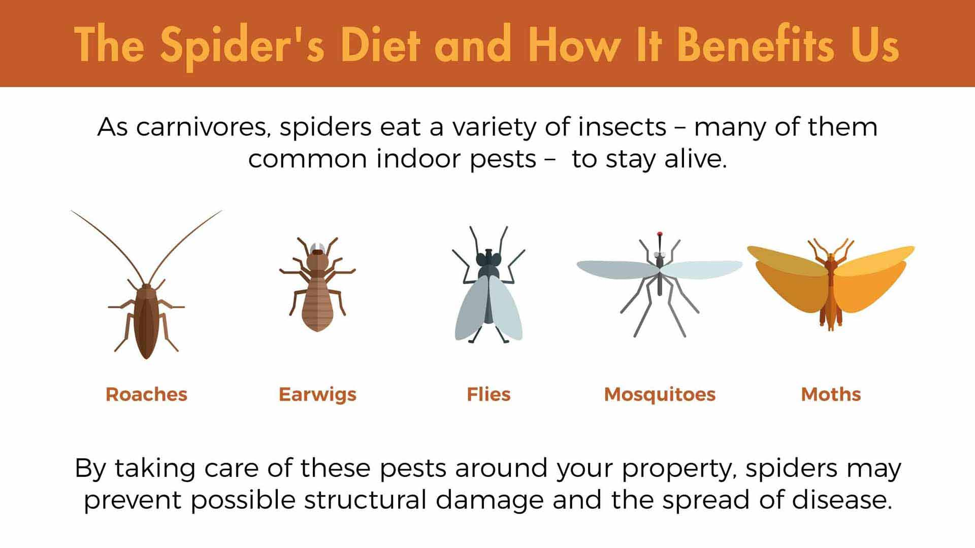 The spider diet is highly beneficial to us. As carnivores, spiders eat a variety of insects – many of them common indoor pests – to stay alive. By taking care of roaches, earwigs, flies, mosquitoes, and moths around your property, spiders may prevent possible structural damage and the spread of disease.