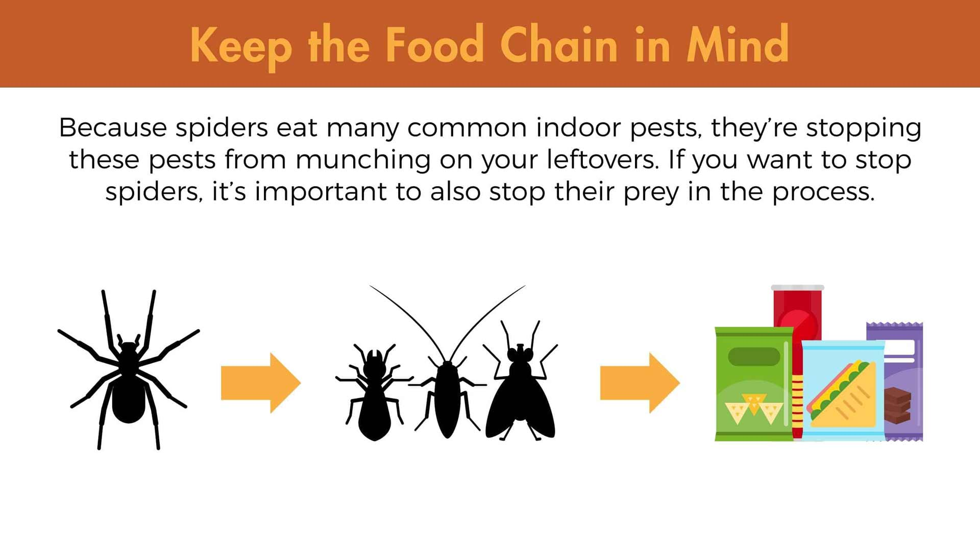 Keep the food chain in mind. Because spiders eat many common indoor pests, they're stopping these pests from munching on your leftovers. If you want to stop spiders, it's important to also stop their prey in the process.