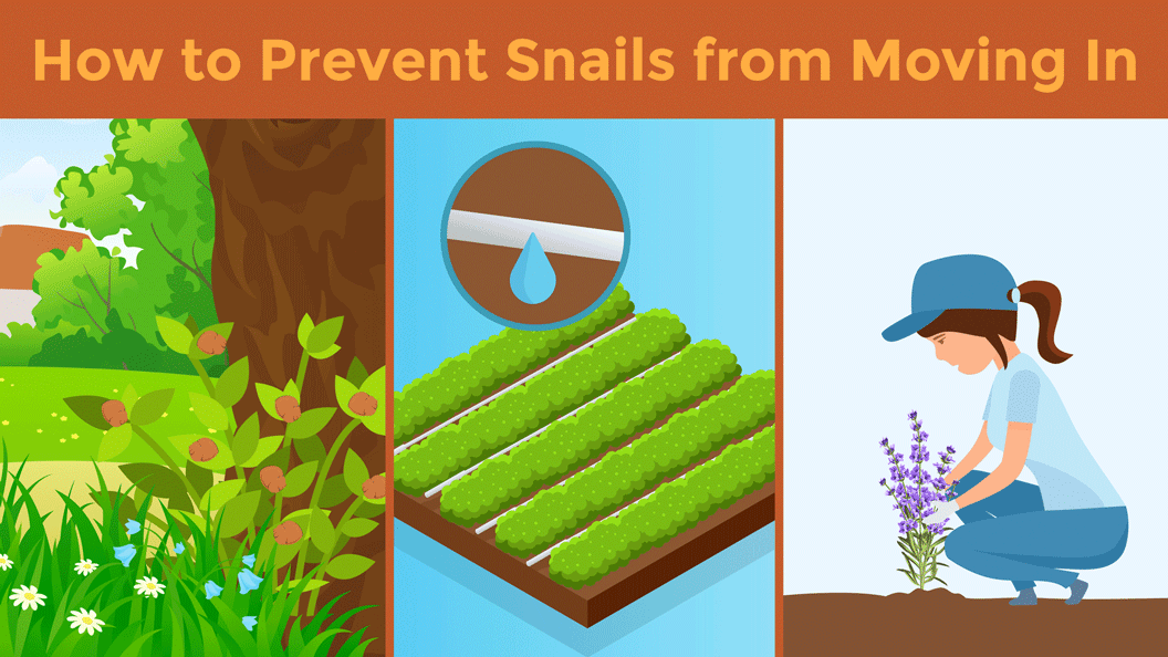 Illustration showcasing three different ways to prevent snails from moving into your yard.