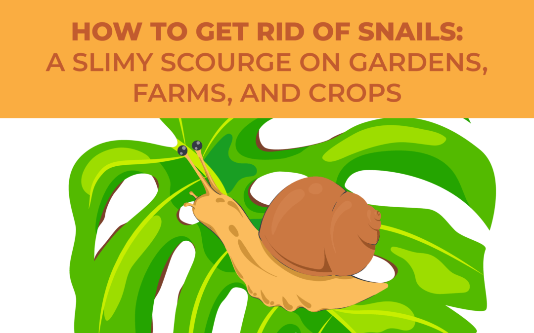 How To Get Rid Of Snails A Slimy Scourge On Gardens Farms And Crops