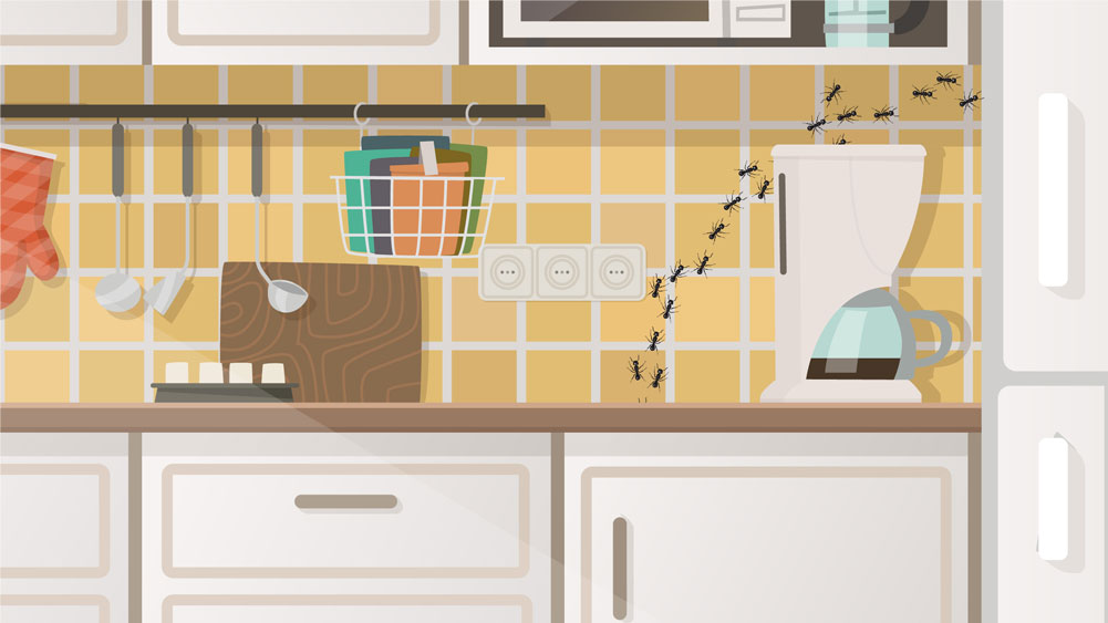 Graphic illustration featuring ants crawling across back-splash tile in kitchen.