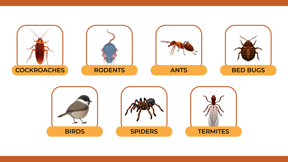 Illustration of common pests that infiltrate properties.
