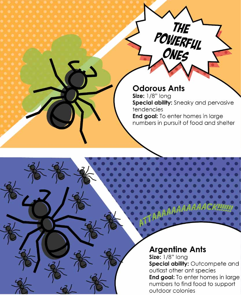 Odorous and Argentine ants are the powerful species. Odorous ants use sneaky and pervasive tendencies to enter homes in large numbers in pursuit of food and shelter. Argentine ants outcompete and outlast other ant species, entering homes in large numbers to find food to support outdoor colonies.