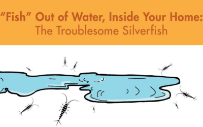 """Fish"" Out of Water, Inside Your Home: The Troublesome Silverfish"