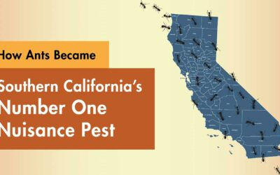 How Ants Became Southern California's Number One Nuisance Pest