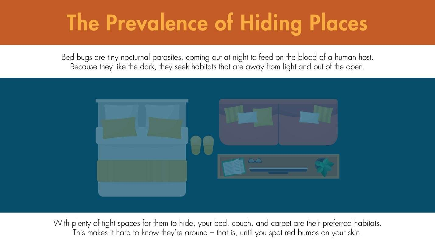 Illustration featuring the places bed bugs reside in inside a home.