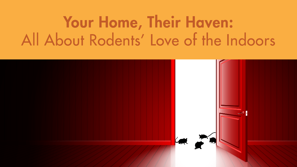 Your Home, Their Haven: All About Rodents' Love of the Indoors