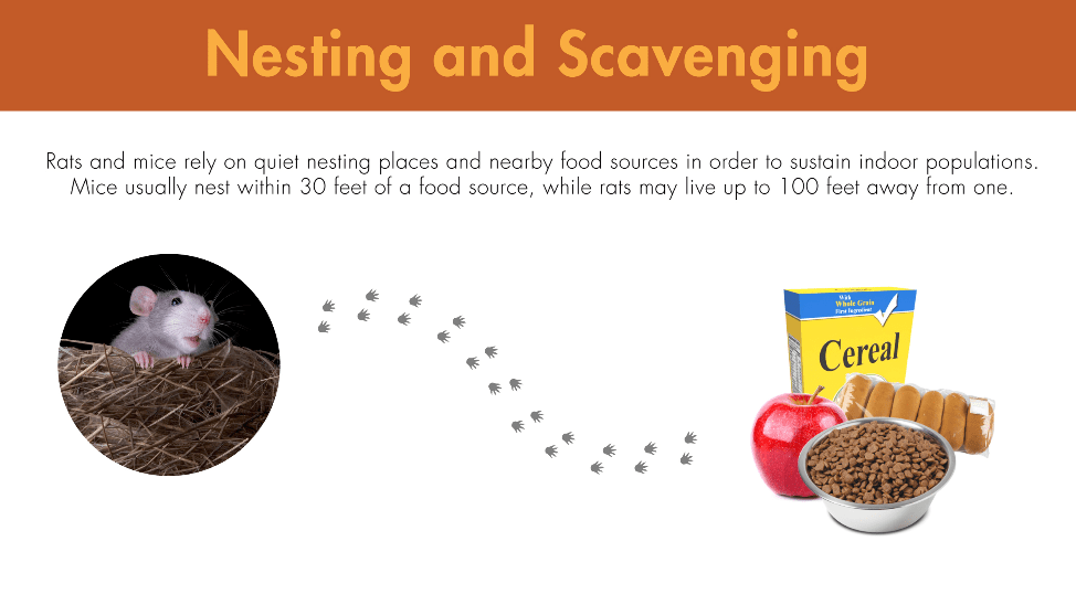 Rats and mice rely on quiet nesting places and nearby food sources in order to sustain indoor populations. Mice usually nest within 30 feet of a food source, while rats may live up to 100 feet away from one.