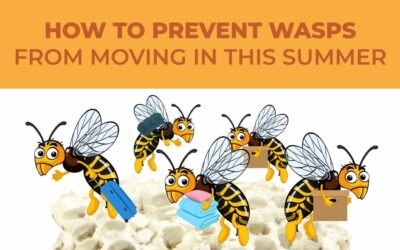 How to Prevent Wasps from Moving In This Summer