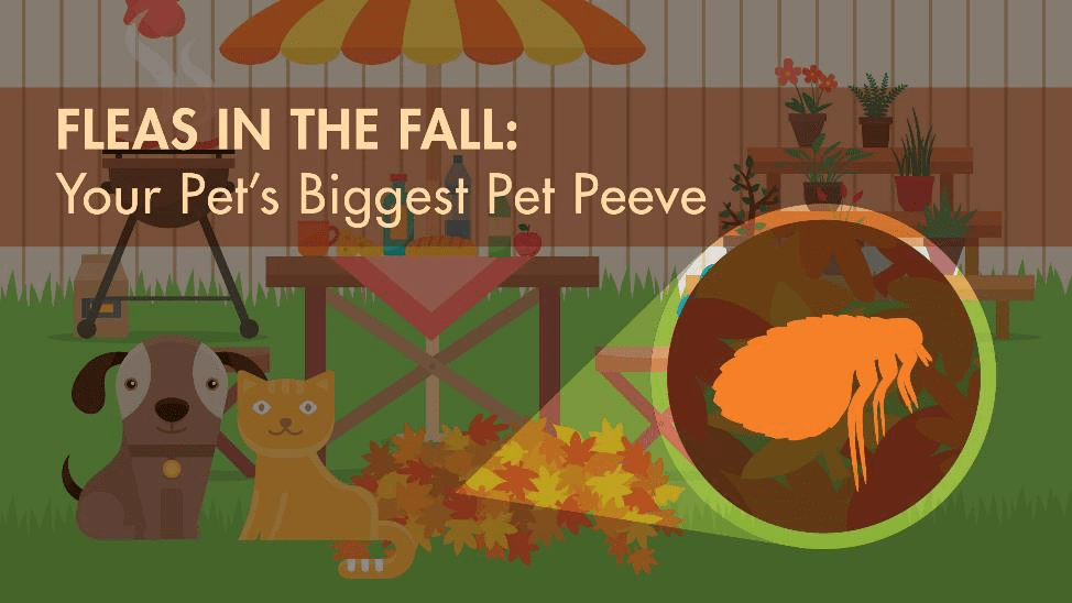 Fleas in Fall: Your Pet's Biggest Pet Peeve