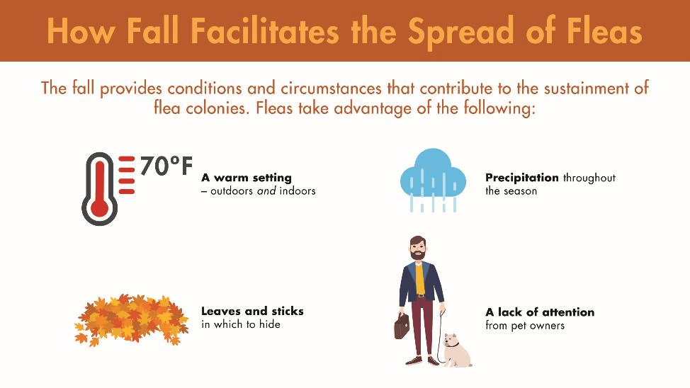 The fall provides conditions and circumstances that contribute to the sustainment of flea colonies. Fleas take advantage of a warm setting, leaves and sticks in which to hide, precipitation throughout the season, and a lack of attention from pet owners.