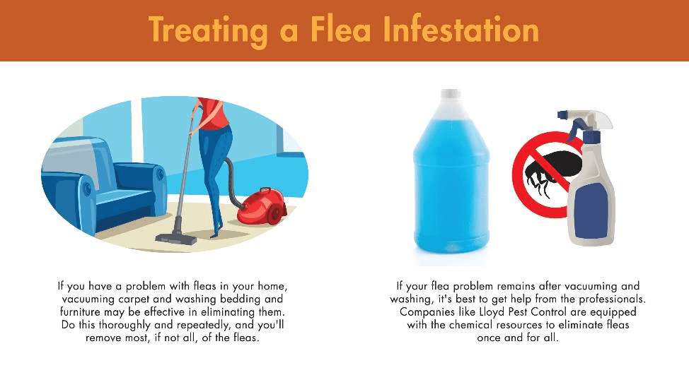 Treating a flea infestation involves vacuuming carpet and washing bedding and furniture. If your flea problem remains after both, get help from the professionals. Companies like Lloyd Pest Control have the chemical resources to stop fleas once and for all.