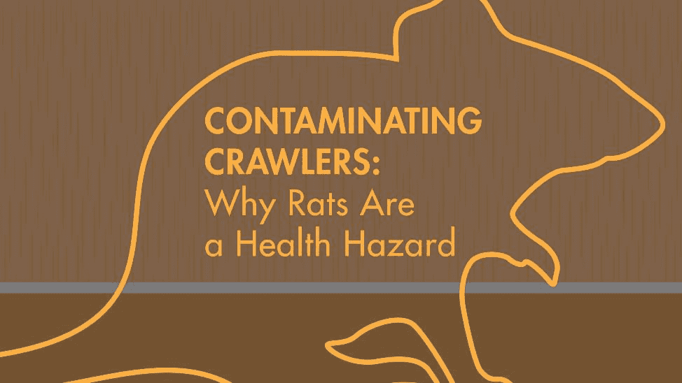 Contaminating Crawlers: Why Rats Are a Health Hazard