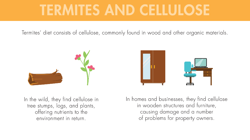 Termites' diet consists of cellulose, commonly found in wood and other organic materials. In the wild, they find cellulose in tree stumps, logs, and plants, offering nutrients to the environment in return. In homes and businesses, they find cellulose in wooden structures and furniture, causing damage and a number of problems for property owners.