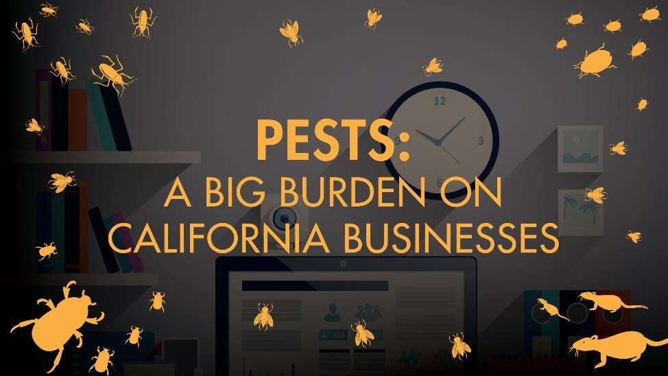 Pests: A Big Burden on California Businesses