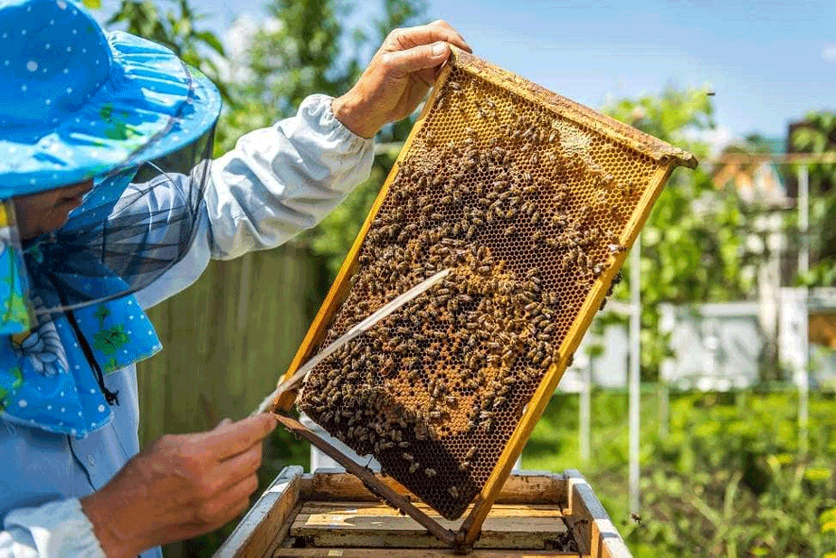 Local Beekeepers: The Key to #SaveTheBees