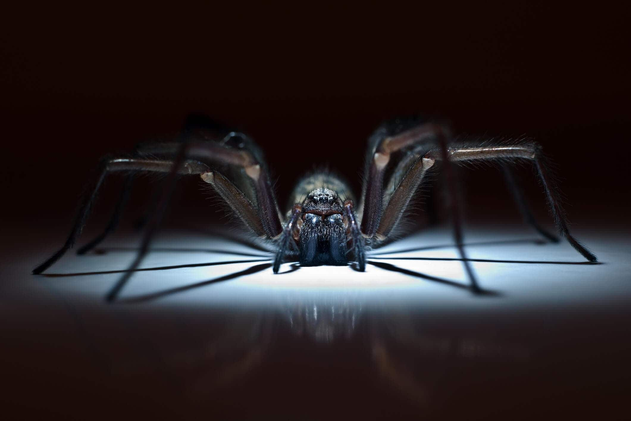 Scary spider hiding in the darkness on Halloween.